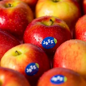 ▲Apple/Jazz Apple 1Kg JAZZ苹果